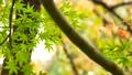 foliage, leaf, leafs 35727877