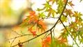 foliage, leaf, leafs 35727878