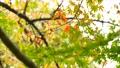 foliage, leaf, leafs 35727879