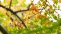 foliage, leaf, leafs 35727881