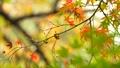 foliage, leaf, leafs 35727883