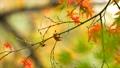 foliage, leaf, leafs 35727884