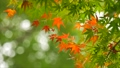 foliage, leaf, leafs 35727944