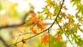 foliage, leaf, leafs 35727945