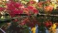 枫树 枫叶 红枫 35894295
