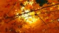 秋の北海道 秋晴れと紅葉 35923500