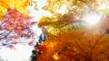 秋の北海道 秋晴れと紅葉 35923501