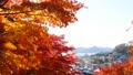 秋の北海道 秋晴れと紅葉 35923503