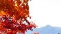 秋の北海道 秋晴れと紅葉 35923504
