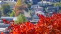 秋の北海道 秋晴れと紅葉 35923505