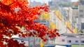 秋の北海道 秋晴れと紅葉 35923506