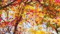 秋の北海道 秋晴れと紅葉 35923508
