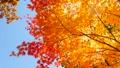 秋の北海道 秋晴れと紅葉 35923511