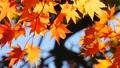 秋の北海道 秋晴れと紅葉 35923512