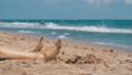 Legs of Woman Lying on Beach near the Sea 35962754