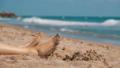 Legs of Woman Lying on the Beach near the Sea in 35986894