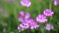 ดอกไม้,ดอกไม้ฤดูใบไม้ผลิ,ผืนนา 35996326