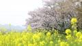 ดอกไม้บานเต็มที่,ทัศนียภาพ,ภูมิทัศน์ 35996327