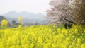 ดอกเรป,ดอกไม้,ดอกไม้บานเต็มที่ 35996328