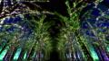 illuminated, illumination, illuminations 36026816