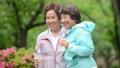 シニア 女性 ジョギング  アクティブシニア イメージ 36027733