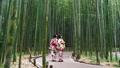 京都・嵯峨野 着物姿の観光客と竹林 36029877