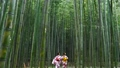 京都・嵯峨野 着物姿の観光客と竹林 36029878