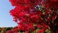 紅葉(黄葉)イメージ 36061316