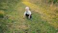 child, kid, boy 36159814