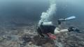 นักดำน้ำ,ใต้น้ำ,ปะการัง 36240241