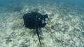 นักดำน้ำ,ใต้น้ำ,ทะเล 36240596