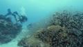 นักดำน้ำ,ใต้น้ำ,ปะการัง 36240675