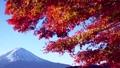 Mt Fuji and autumn leaves and Lake Kawaguchi (bread) 36245877