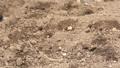 potato, farm, soil 36263538