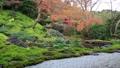 瑠璃光院 庭園 紅葉 36343685