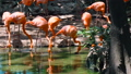 Fascinating flock of pink flamingo tender bird 36396717