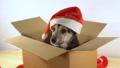 cute, box, looking 36466493