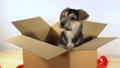 cute, box, looking 36466498