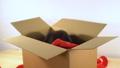 cute, box, looking 36466499