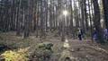 仲間 森林 林の動画 36563960