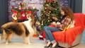 わんこ 犬 コリーの動画 36645847