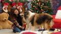 わんこ 犬 刷毛の動画 36645889