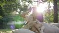 dog, park, outdoor 36653199