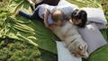 dog, park, pet 36653587
