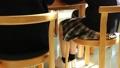 学校 人物 学生 図書室 36675309