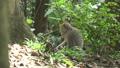 动物 猴子 丛林 36683761