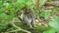 동물, 원숭이, 밀림 36683784