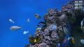 鱼 动物 水族馆 36792261