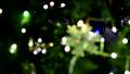 雪の結晶 光玉 ボケ ハート フォーカス・イン 36852812