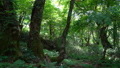 ブナ林の風景 パンニング 36869680